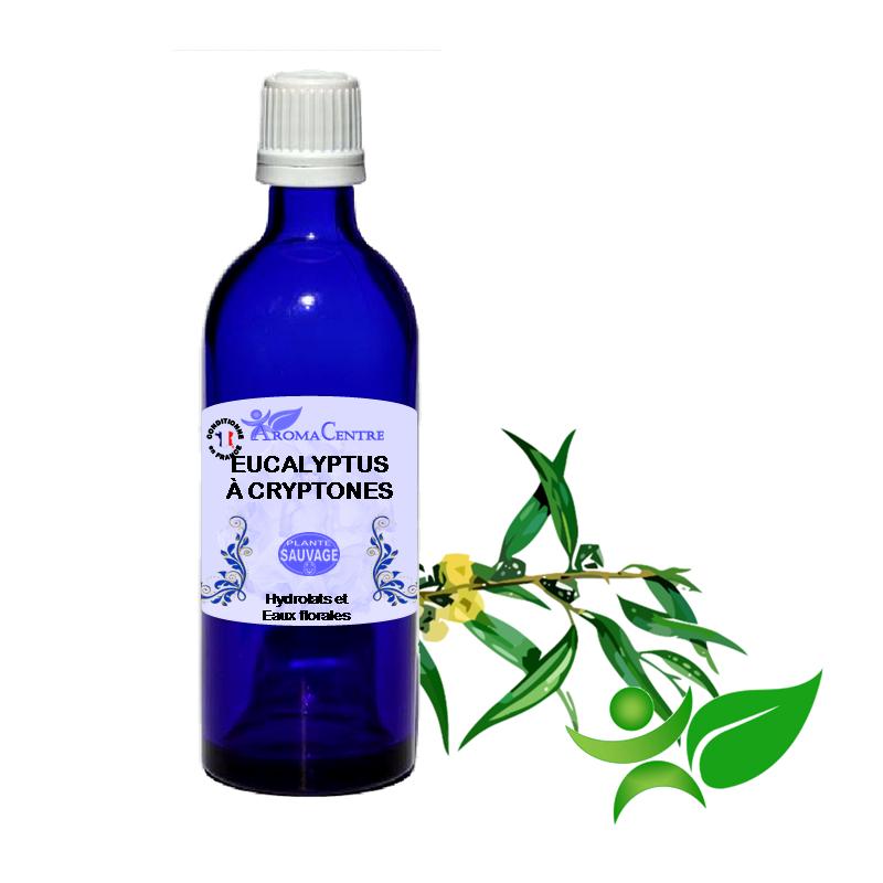 Eucalyptus à Cryptone, Hydrolat (Eucalyptus polybractea krypton) - Aroma Centre