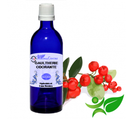 Gaultherie, Hydrolat (Gaultheria fragrantissima) - Aroma Centre