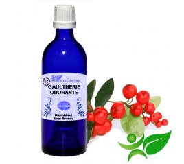 Gaultherie, Hydrolat (Gaultheria fragrantissima) - Aroma Centre