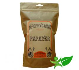 PAPAYER, Feuille (Carica papaya) - Apophycaire