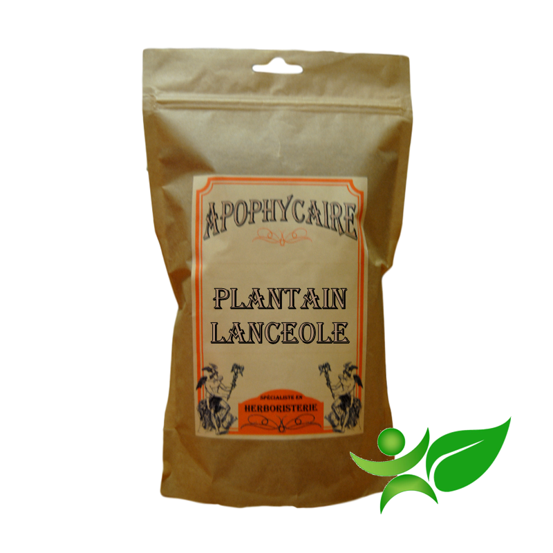 PLANTAIN LANCEOLE, Feuille poudre (Plantago lanceolata) - Apophycaire