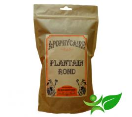 PLANTAIN ROND, Feuille (Plantago major) - Apophycaire