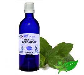 Menthe bergamote, Hydrolat (Mentha citrata) - Aroma Centre