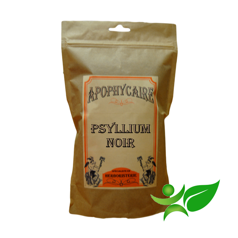 PSYLLIUM NOIR, Graine poudre (Plantago psyllium) - Apophycaire