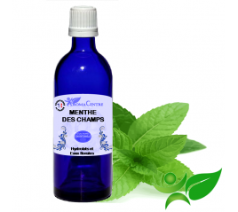 Menthe des champs, Hydrolat (Mentha arvensis) - Aroma Centre