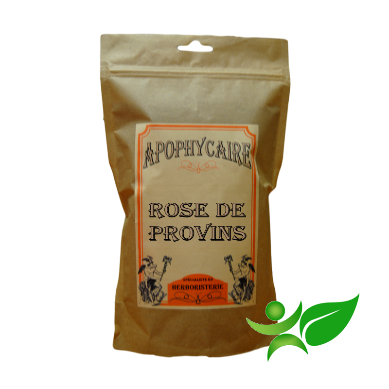 ROSE DE PROVINS, Bouton (Rosa gallica) - Apophycaire