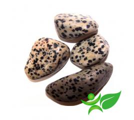Jaspe Dalmatien , Pierre roulée - Gemstones