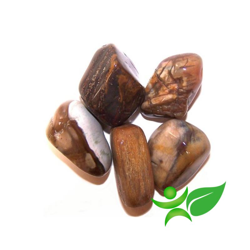 Bois pétrifié ou fossilisé, Pierre roulée - Gemstones