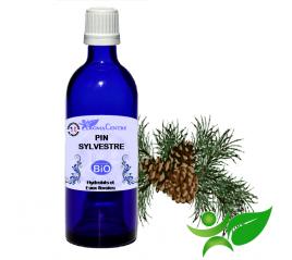 Pin Sylvestre BiO, Hydrolat (Pinus sylvestris) - Aroma Centre
