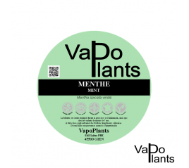 Menthe, feuille BiO (Mentha spicata var. viridis) boite 25g - Vapo Plants