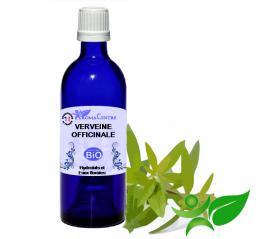 Verveine officinale BiO, Hydrolat (Verbena officinalis) - Aroma Centre