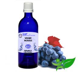 Vigne rouge BiO, Hydrolat (Vitis vinifera var. tinctoria) - Aroma Centre
