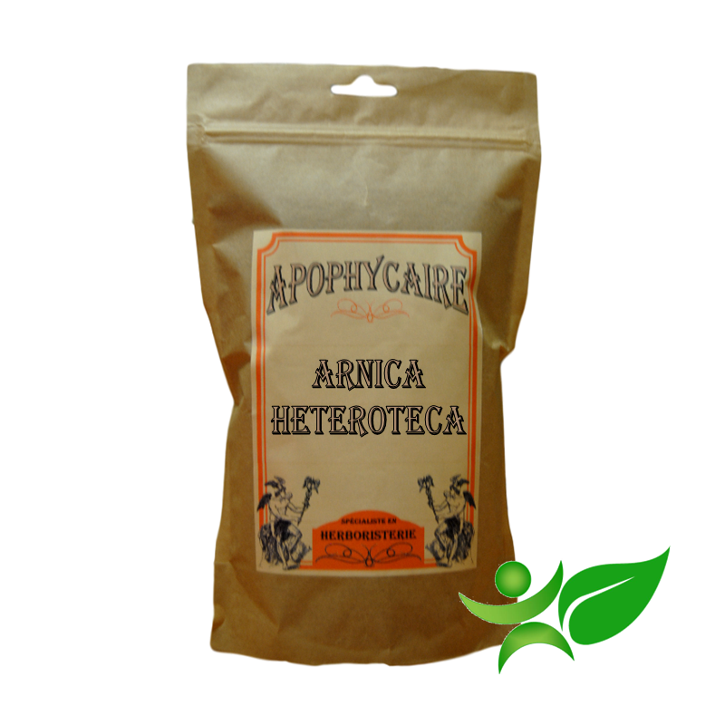 ARNICA - HETEROTECA, Capitule floral (Heteroteca inuloides) - Apophycaire
