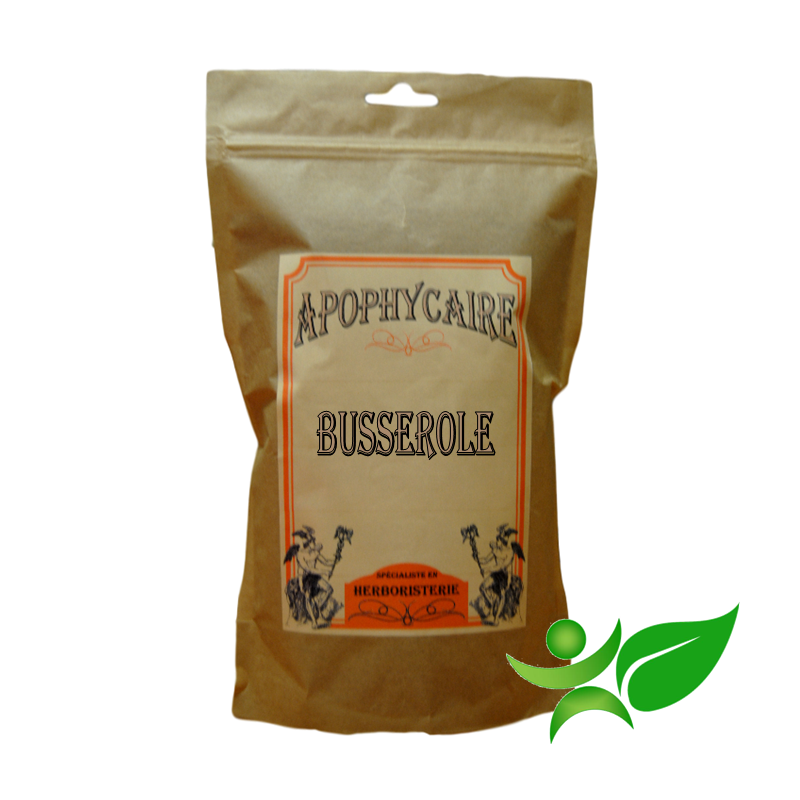 BUSSEROLE, Feuille coupée (Arctostaphylos uva-ursi) - Apophycaire