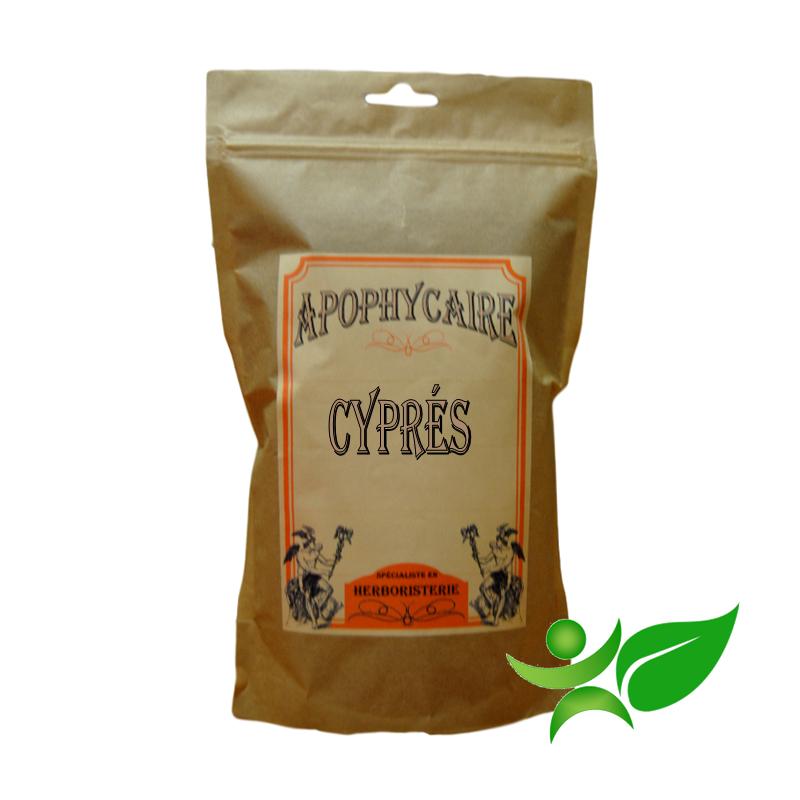 CYPRES, Rameau (Cupressus sempervirens) - Apophycaire